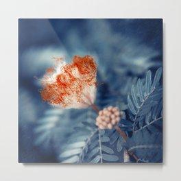 Acacia Flower Metal Print