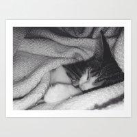 A Cat Nap Art Print