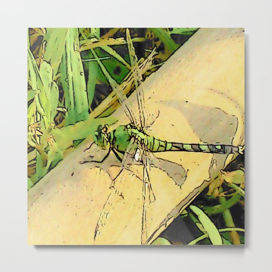 Dragonfly Delight Metal Print