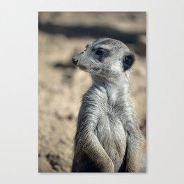 Cute Meerkat Canvas Print
