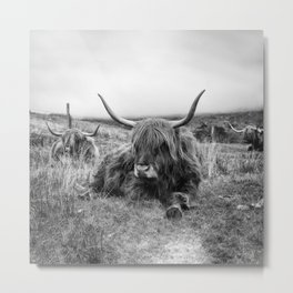 Highland Cow Sitting in a Field With Friends  Metal Print