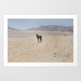 Wild Horse of Namibia Art Print