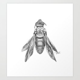 Orchid Bee Illustration Art Print