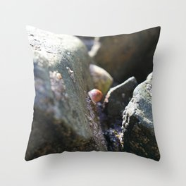 Sea Snails Grazing on Ocean Weathered Rocks with Barnacles Throw Pillow