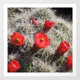 A Hedgehog Cactus Looks Sunward Art Print