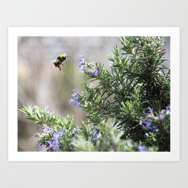 bumble bee flight Art Print