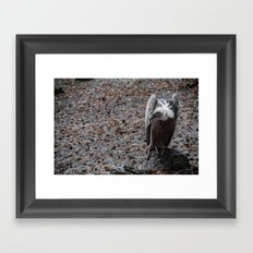 vulture after rainin' Framed Art Print