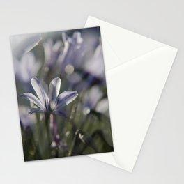 Quiet Splendor Stationery Cards
