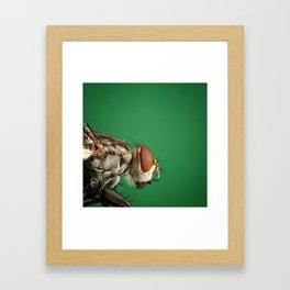 Fly Macro Framed Art Print