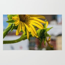 Yellow Flower in NYC Rug