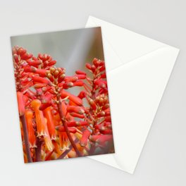 Orange Flower Buds Stationery Cards