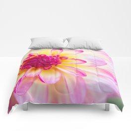 Dahlia Blossom Comforters
