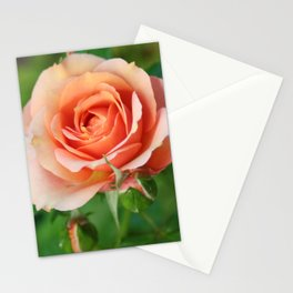 Garden pink rose flower blooming and two rose buds Stationery Cards