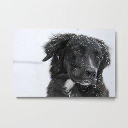 Black Dog in the Snow Metal Print