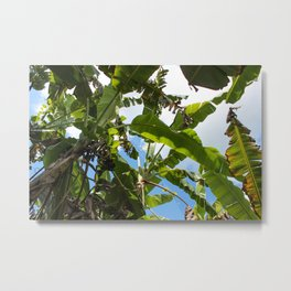 Banana Leaf Canopy Metal Print