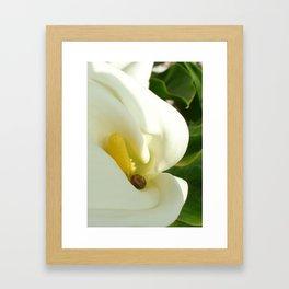 Beautiful Calla Flower On Green Natural Background Framed Art Print