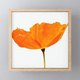 One And Only - Orange Poppy White Background #decor #society6#buyart Framed Mini Art Print