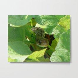 Radish snake..... Metal Print