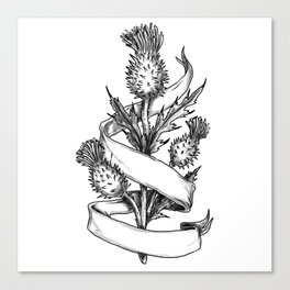 Scottish Thistle With Ribbon Sketch Canvas Print