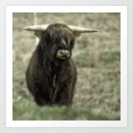 Highland Cattle III Art Print