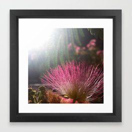 Ojai, California: Sunset Bottlebrush Framed Art Print