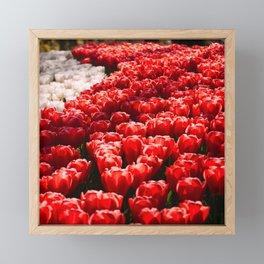 Tulips field 42 Framed Mini Art Print