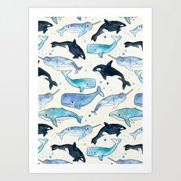 Whales, Orcas & Narwhals Art Print
