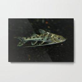 Here fishy, fishy! Metal Print