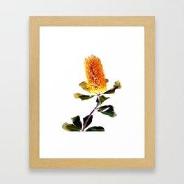 Beautiful Australian Banksia Flower Framed Art Print