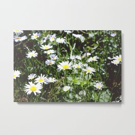 Oh Daisys Metal Print