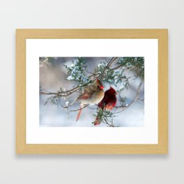 Shining on Her Own (Cardinal) Framed Art Print