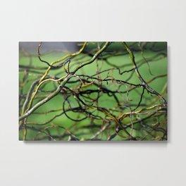 Tangle of Willow Metal Print