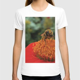 Bee on Mexican Sunflower T-shirt