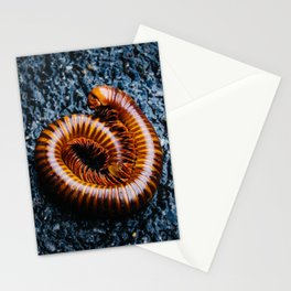 Millipede in Ayutthaya Stationery Cards