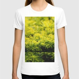 Taxus baccata Yew new shoots T-shirt