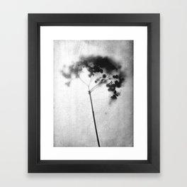 Hydrangea Black and White Vintage Look Botanical Photo Framed Art Print
