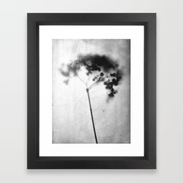 Hydrangea Black and White Vintage Look Botanical Photo Framed Art Print