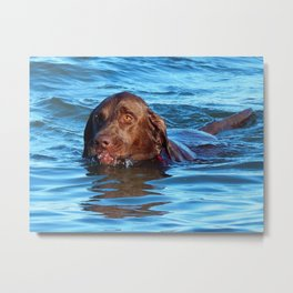Water dog Metal Print