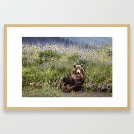 Momma Bear Nursing in the Lupines Framed Art Print
