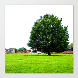 Windswept - Tree in field (Wiltshire, England) Canvas Print