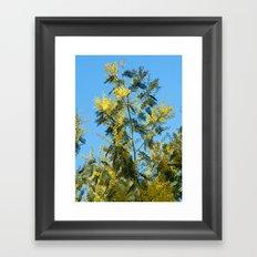 Yellow mimosa flowers 1257 Framed Art Print