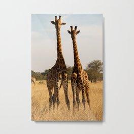 The giraffe sisters Metal Print