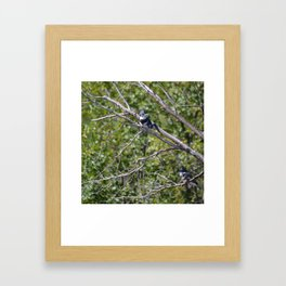 Two 4 One - Belted Kingfisher Framed Art Print