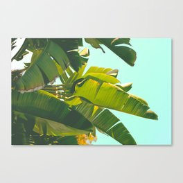 Palm Tree Leaves II (Turquoise) Canvas Print