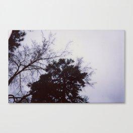 Blue Skys Canvas Print