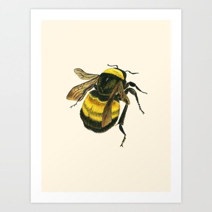 Vintage Scientific Bee Kunstdrucke
