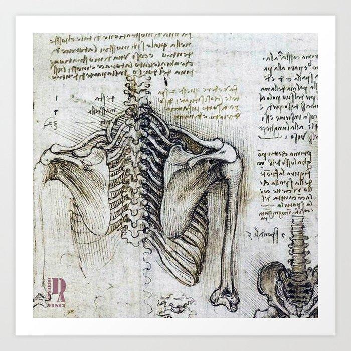 Leonardo Da Vinci Human Body Sketches Skeleton Art Print By