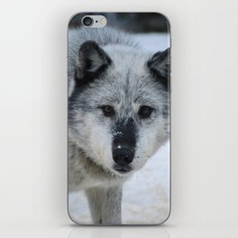Lone wolf roams the Canadian Rockies iPhone Skin