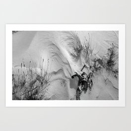 Wind Carves Graceful Curves in a Snowy Joshua Tree Art Print