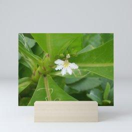 Beach Lettuce Bloom Mini Art Print